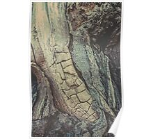 Tree Spine 01D Poster