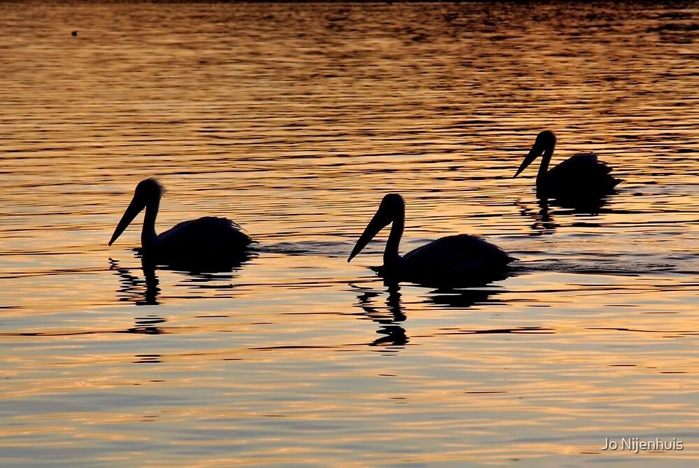 Pelican Silhouettes by Jo Nijenhuis