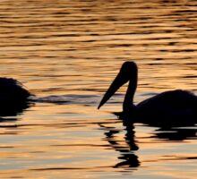 Pelican Silhouettes Sticker