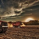 Evening Harvest by Steve Baird