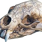 Jaguar Skull by Michael Wolf