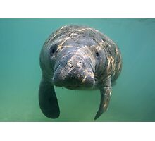 Manatee 3 Photographic Print