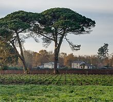 Vista on vineyards at Leognan by 29Breizh33