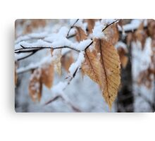 Snowy Leaf Close-up (winter snow scene) Canvas Print
