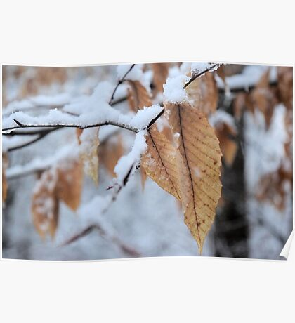 Snowy Leaf Close-up (winter snow scene) Poster