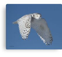 Queen of the sky Canvas Print