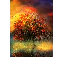Tree of Wonder Photographic Print