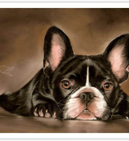 Bulldogge Bully Hund Dog french Bulldog Sticker