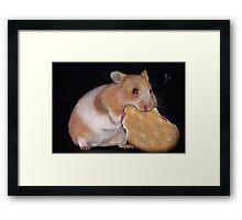 Hamster Goldhamster Framed Print