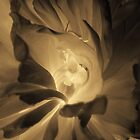 Dark flower photography in sepia by purplesparrow