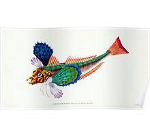 The Natural History of British Fishes Edward Donovan 1802 031 Poster