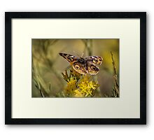 The Common Buckeye Framed Print