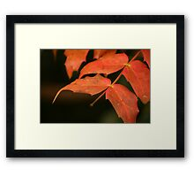 Red leaves in Autumn Framed Print