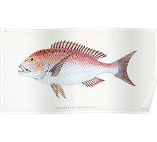 The Natural History of British Fishes Edward Donovan 1802 043 Poster