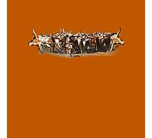 "Texas Longhorns ""The Herd"" Daniel Adams Photographic Print"