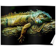 lizard face edmonton zoo Poster
