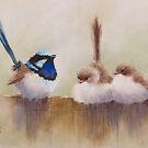 Superb Fairy Wrens 20150220 by JulieWickham