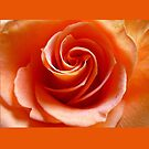 Creamsicle Swirls......... by Linda Bianic