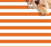 Cat vrs Dog Sticker