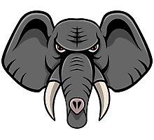 Elephant Face Photographic Print