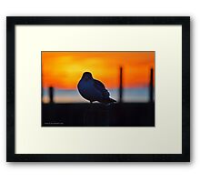 Eye Contact With An Young Seagull At Dawn | Sayville, New York Framed Print