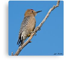 Male Gila Woodpecker Canvas Print