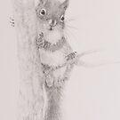 Squirrel - 20150802 by JulieWickham