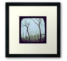 TTV - the trees (2011) Framed Print