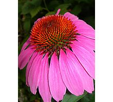 Coneflower Closeup Photographic Print