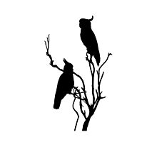 Wild Cockatoos by Anne van Alkemade