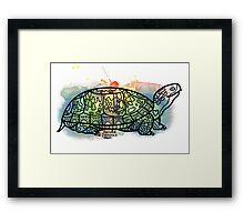 Box Turtle Animal Ally Framed Print
