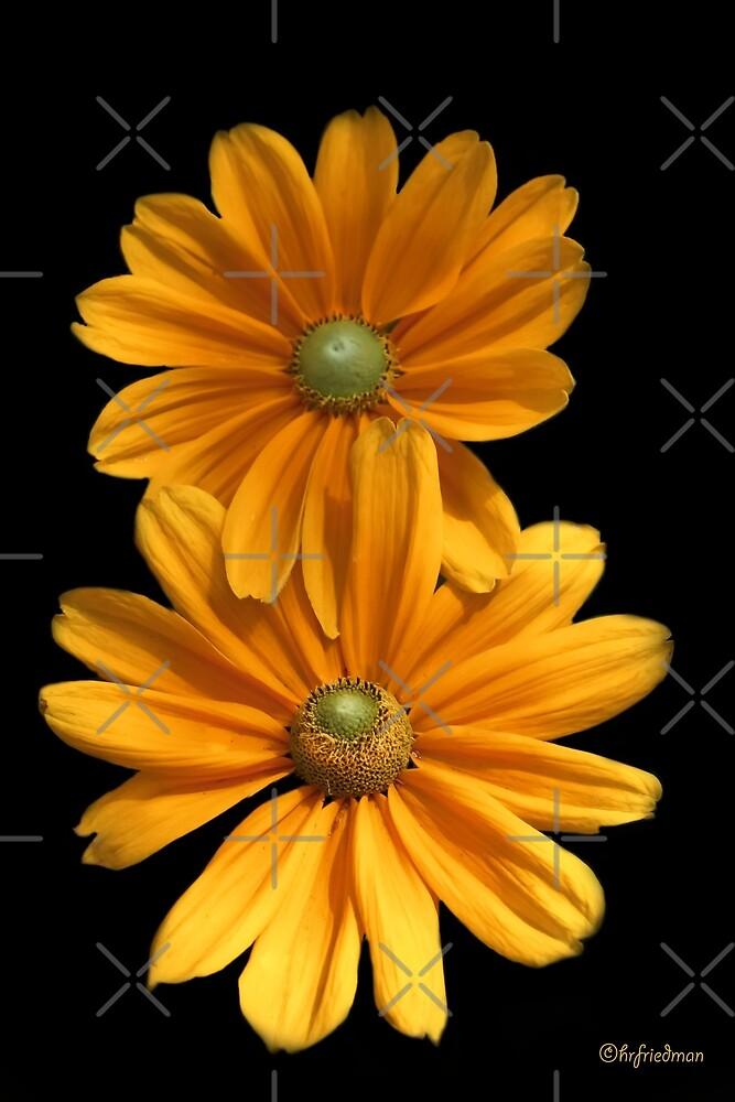 Double Daisy Delight  by Heather Friedman