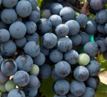 Harvest Time at Coronado Vineyards Sticker