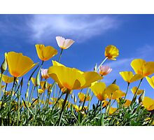 Poppies and Blue Arizona Sky Photographic Print