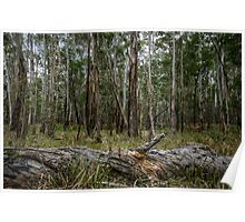 An Australian Bush Scene Poster