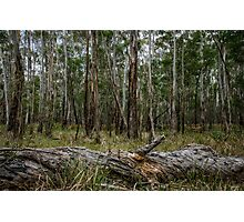 An Australian Bush Scene Photographic Print