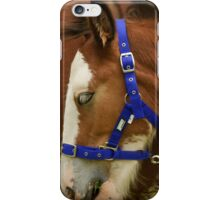 Baby  Foal  iPhone Case/Skin