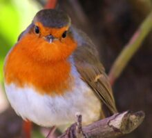 Robin in the undergrowth Sticker