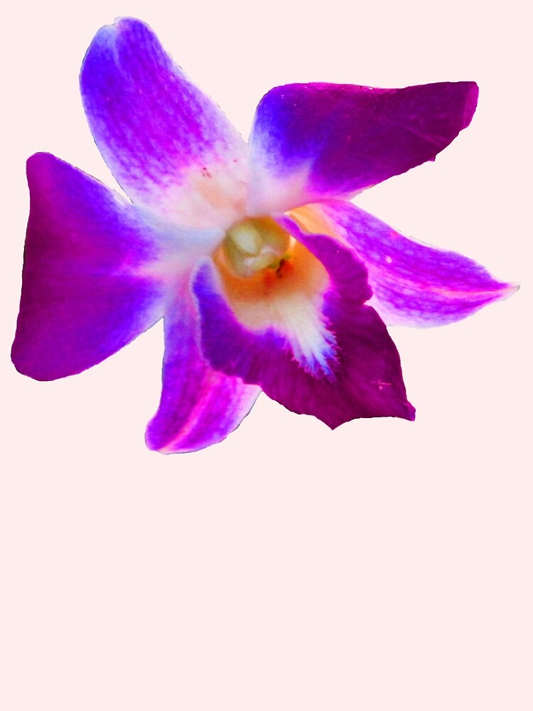 Thai Orchid by DAdeSimone