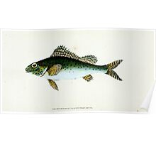 The Natural History of British Fishes Edward Donovan 1802 008 Poster