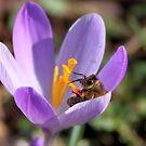 Bee Happy by Jo Nijenhuis