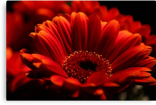 Red Delight by karina5