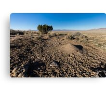 Desert scene with ant hill and mud Canvas Print