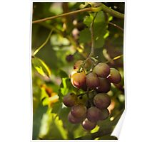 Shy Grapes Poster