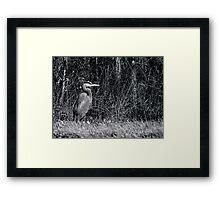 Heron, Hunting Framed Print