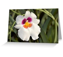 Pansy Orchid Greeting Card