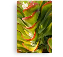 Succulent green beauty Canvas Print