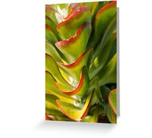 Succulent green beauty Greeting Card