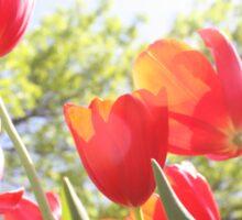 Red Tulips Photo Sticker