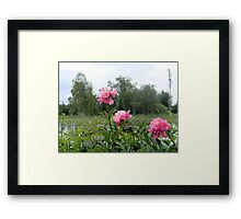 Peonies by the Lake Framed Print